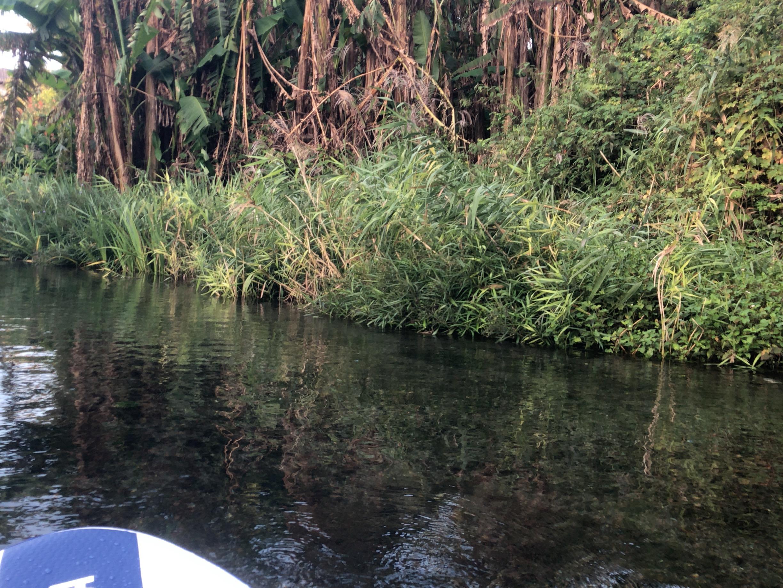 【SUP】上江津湖の隠れ絶景ポイントの『ネイチャーコース』を紹介するよ